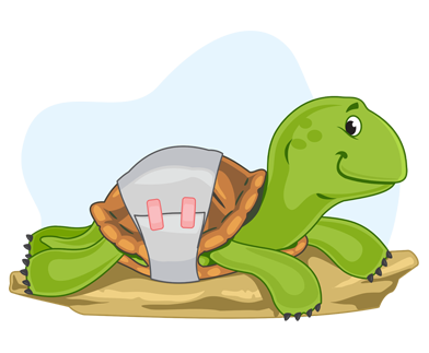 Freedom from pain, injury, or disease - Turtles