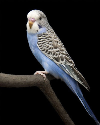 Freedom to Express Normal Behaviour | Animal Care for Bird