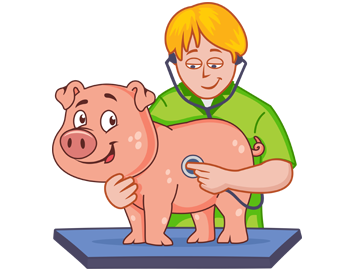 Freedom from pain, injury, or disease - Pig