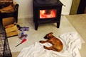 Baz loves to sleep by the fire