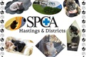 Some of the animals from Hastings SPCA - by Georgia
