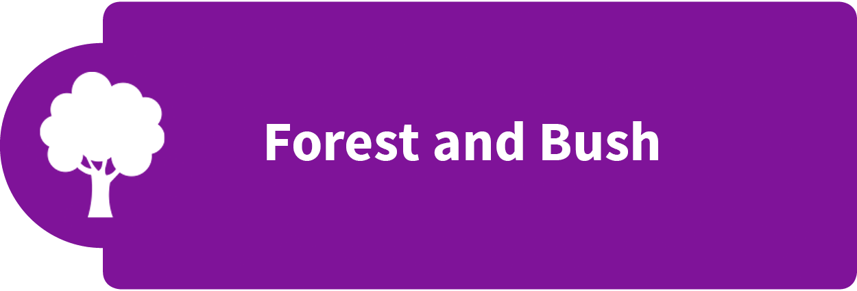 Forest and Bush