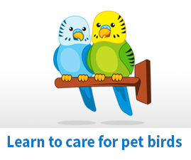 How to care for Pet Birds
