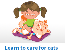 Learn to care for cats