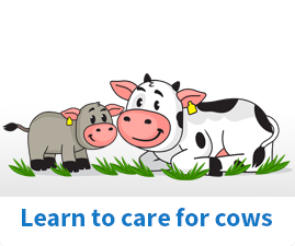 How to care for Cows