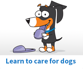 Learn to care for dogs
