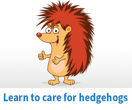 How to care for hedgehogs