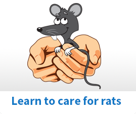 Learn to care for rats