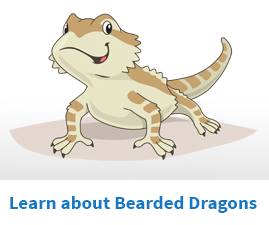 Learn to care for bearded dragons