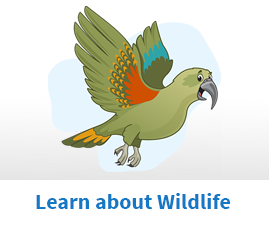 Learn about Wildlife
