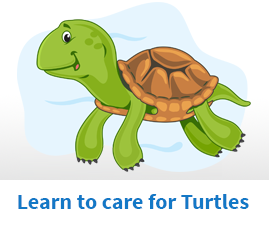 Learn to care for turtles